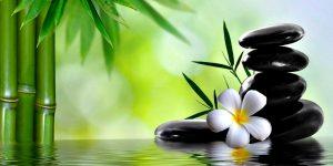 spa-bambus-kwiatek-kamieniedobry