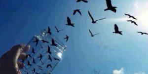wolność1-jest